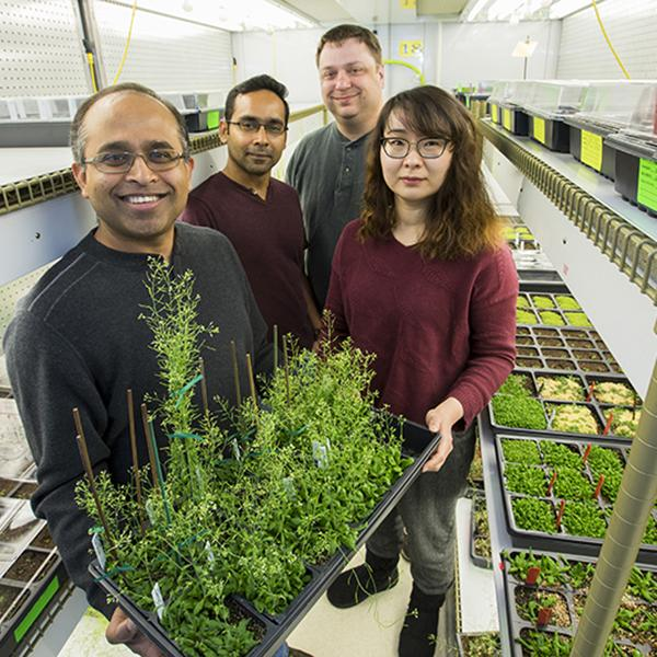 Keeping plant-cell motors on track