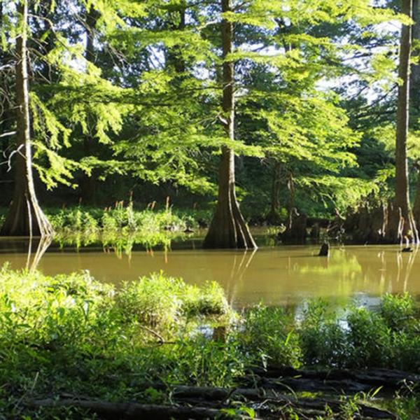 Discovery of CO2-absorbing bacteria in Missouri bolsters wetlands' importance in combating climate change