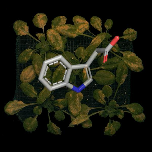 Plotting the path of plant pathogens