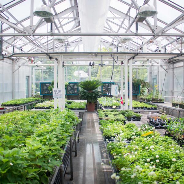 Greenhouse Assistant position available in the Biology Department