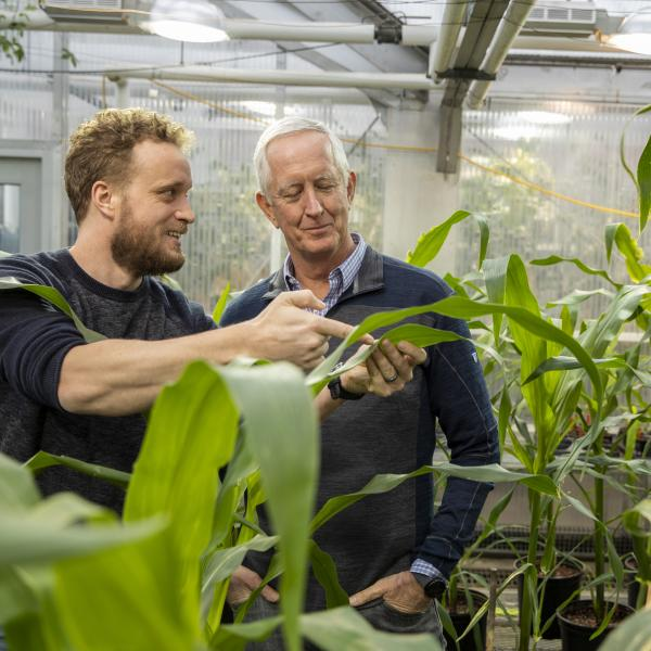 Plants without cellular recycling systems get creative in the dark