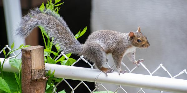 From pigeon stalker to squirrel chaser: Elizabeth Carlen studies urban wildlife in St. Louis